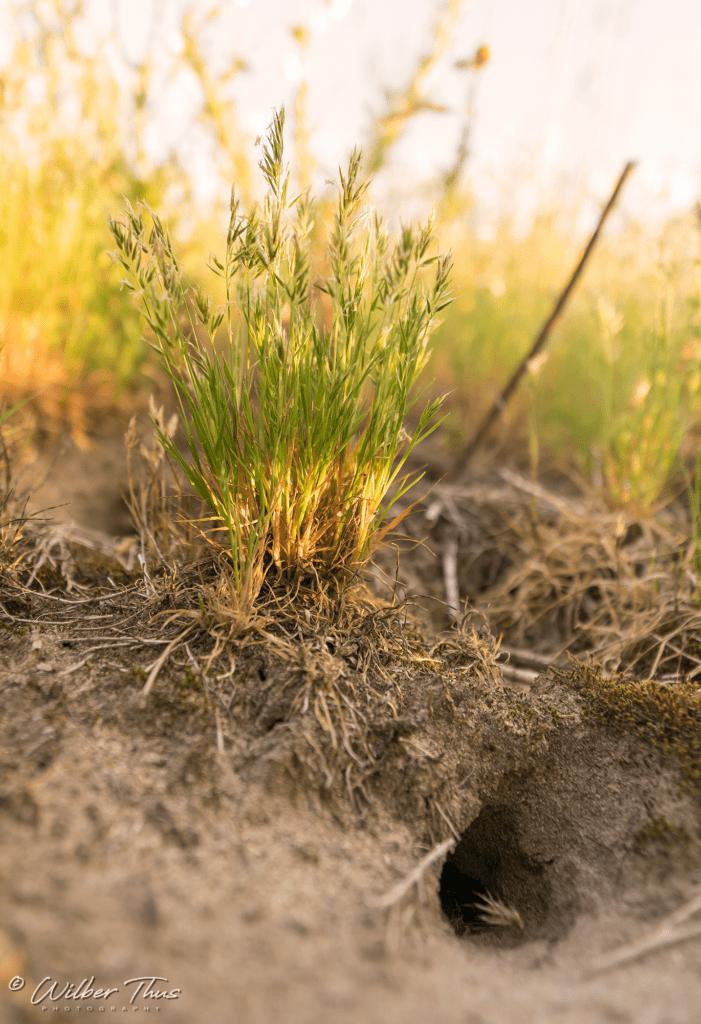 Buur maakt Natuur - De Watertap in Gaanderen natuurakker