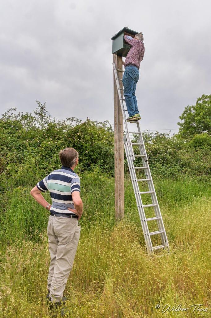 Buur maakt Natuur - Torenvalken inspectie 't Knapperslag