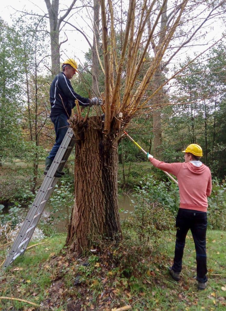 Buur maakt Natuur - Werkgroep De Groene Knoop - Wilgen knotten